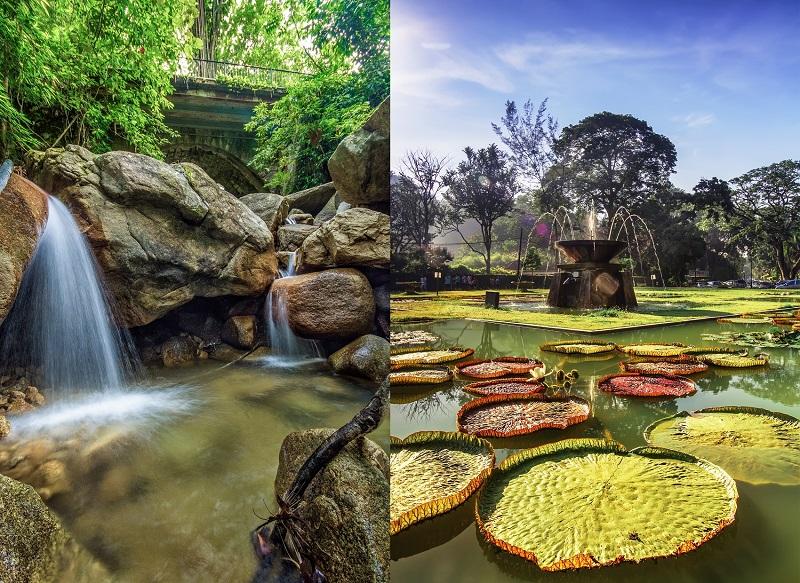 vuon-thuc-vat-Penang-Botanical-Garden