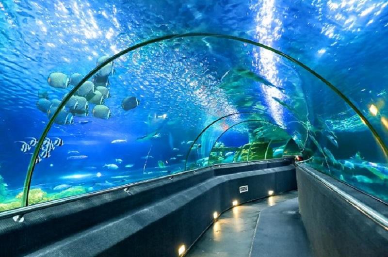 thuy-cung-Aquaria-KLCC