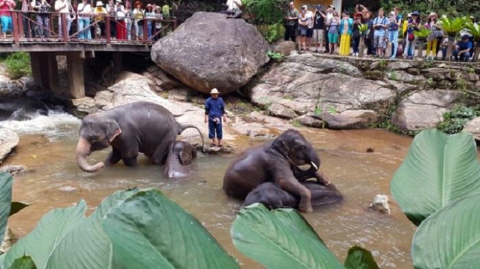 Chiang Mai 7