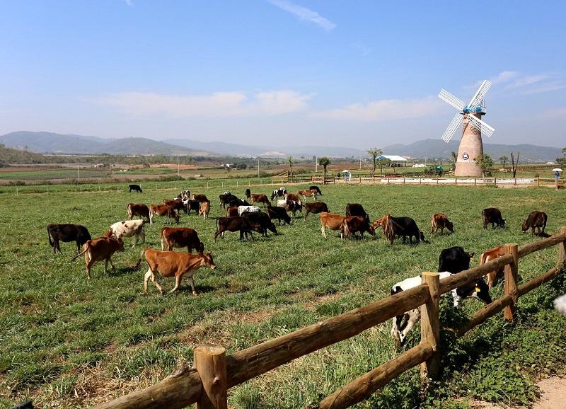 da-lat-milk-farm-4